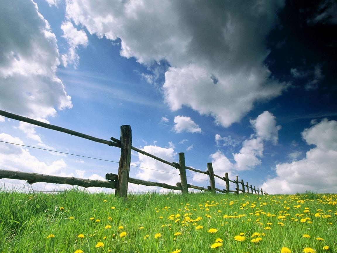 http://1.bp.blogspot.com/-m_mxtsswAR4/TsdR86YAo-I/AAAAAAAABTY/FbOpE3yrUS0/s1600/sky-and-flowers-blue%2Bsky%2Bwallpaper.jpg