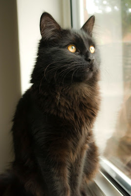 black cat looking off into the distance