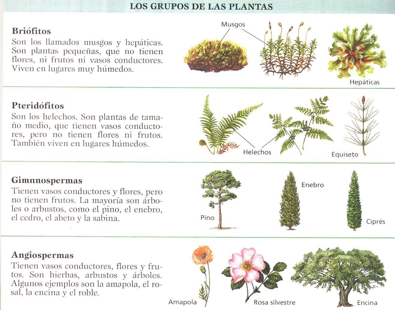 Plantamer clasificaci n de las plantas for Diferentes plantas ornamentales