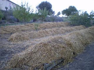 Tresors de campagne plantation de fraisiers sur les for Permaculture terrasses et buttes