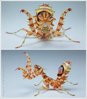 Fotografi Makro Pada Serangga