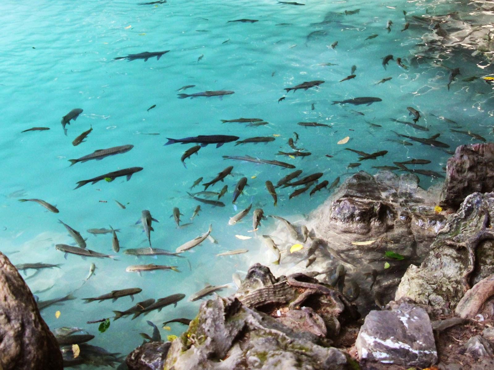 poissons cascades erwan
