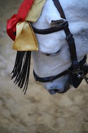 Caballo torero