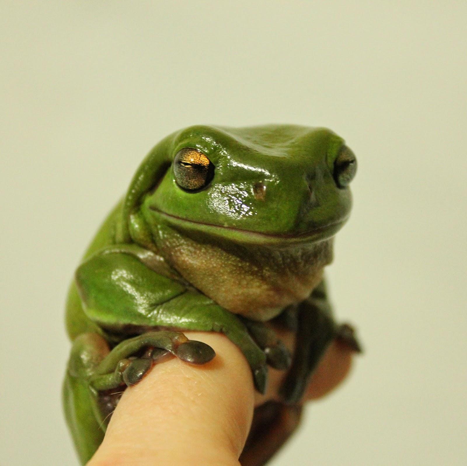 shukernature glowing mudskippers and flashlight frogs u2013 two
