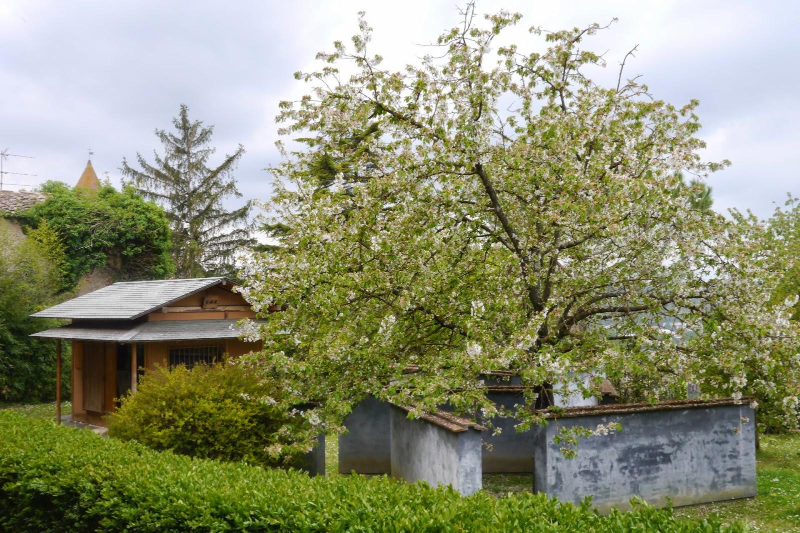 Girovagando due giardini giapponesi in toscana - Giardini giapponesi ...