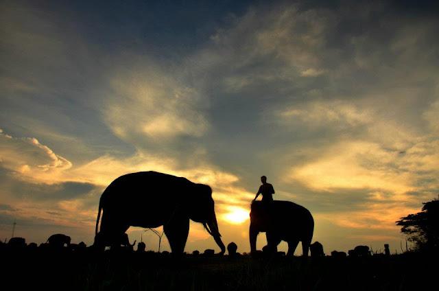 Polhut Memergoki Belasan Manusia Kerdil di TN Way Kambas