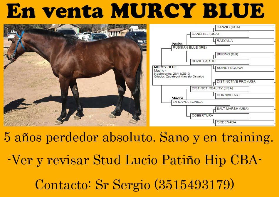 VENTA MURCY BLUE