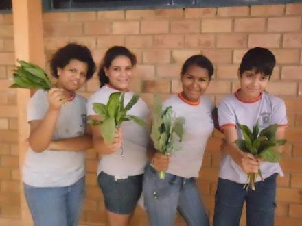 Alunos colhendo as hortaliças plantadas por eles...