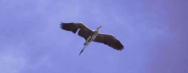 Nusantara, Bak Surga Bagi Burung Migran