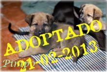 Pimpo adoptado