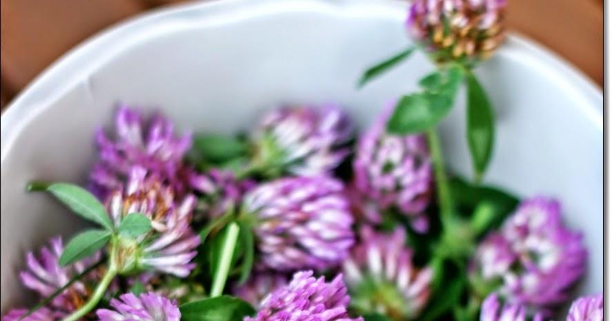 Trifoglio Rosso: utile per la menopausa e la disfu...