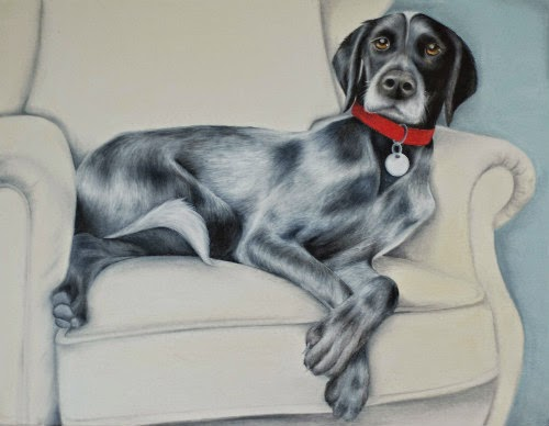 German Shorthaired Pointer Cross Pet Portrait