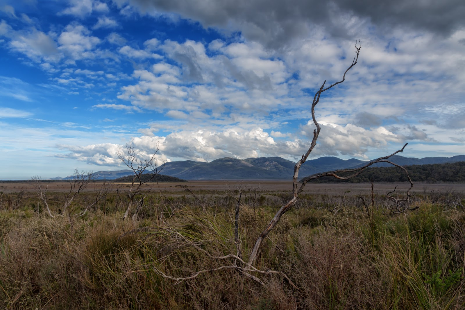 open ground at wilsons promontory