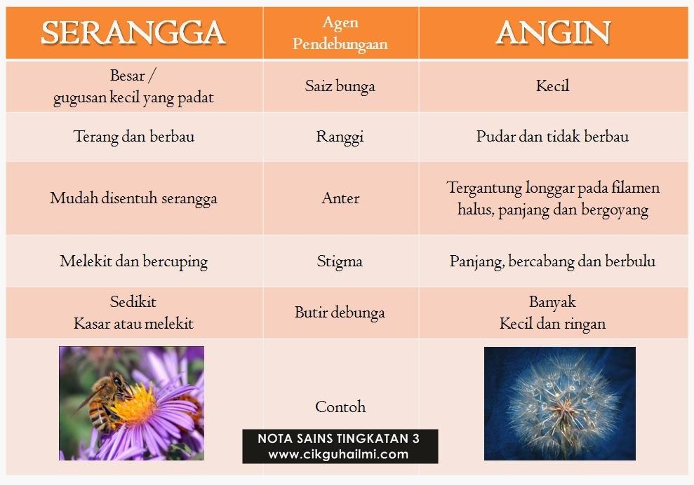 perbezaan pada bunga yang didebungakan oleh serangga dan bunga yang didebungakan oleh angin