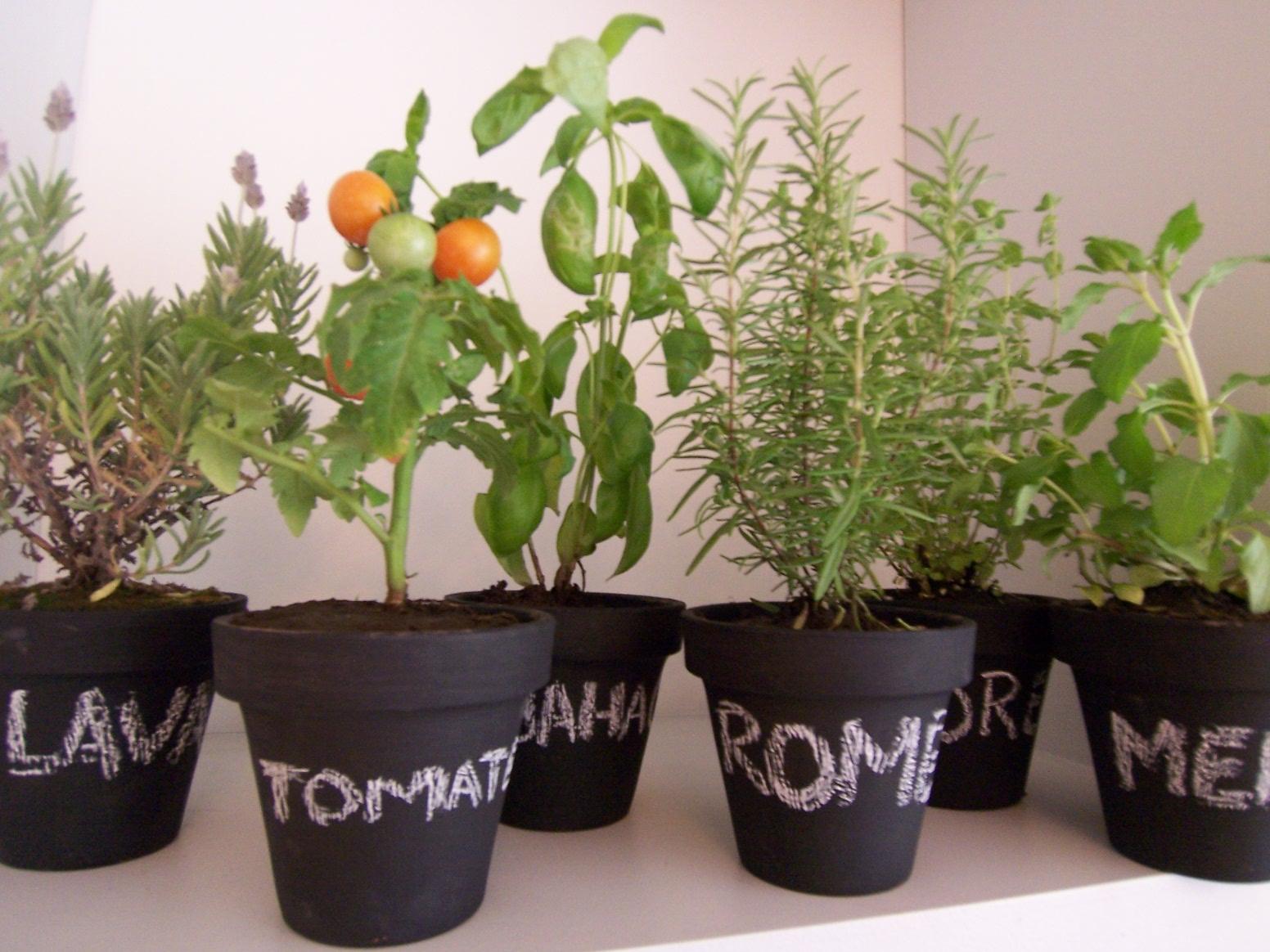 Anikaflor huertas urbanas for Plantas beneficiosas para el huerto