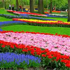 SUMMARY OF FLOWER GARDEN WALLPAPERS