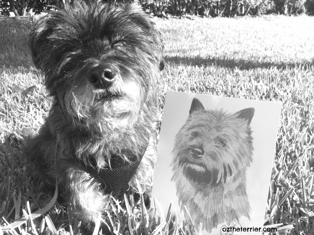 Oz the Terrier poses with an original portrait of a Cairn Terrier, inspired by him and drawn by a good friend