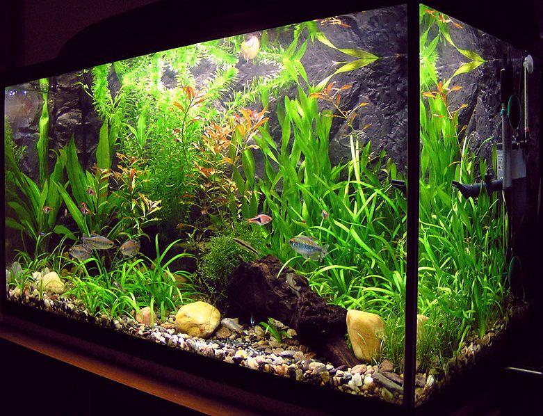 Un acuario (acuarios plurales o acuarios) es un vivero que consiste en al menos un lado transparente en el que viven en