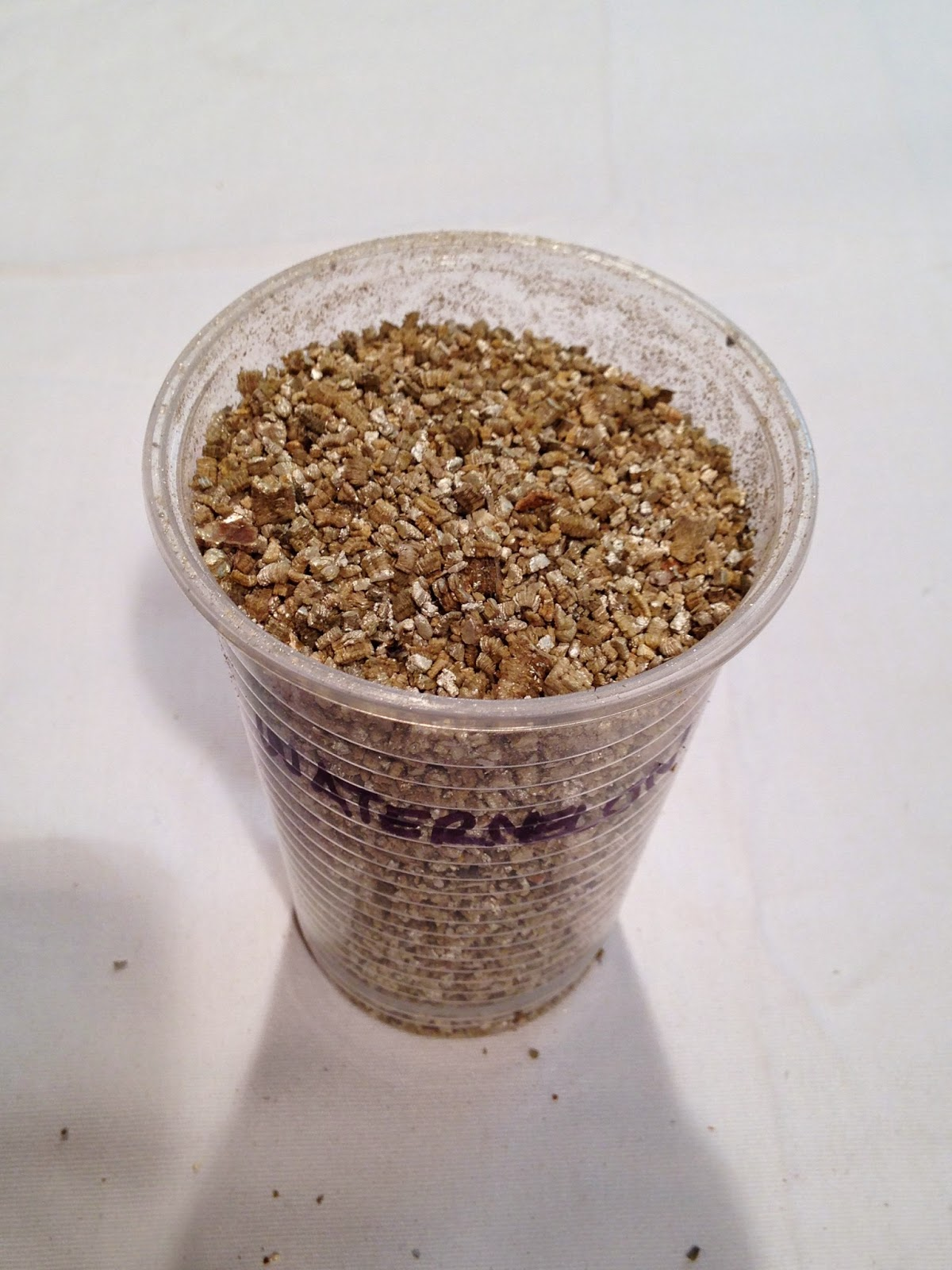 Rugged Homestead: Step-by-Step Guide to Indoor Seed Starting