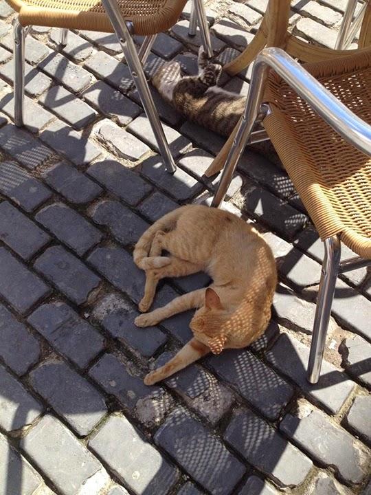 Cats of Havana Cuba