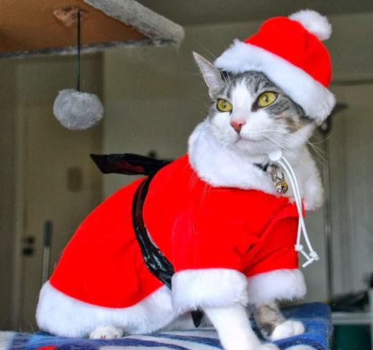 Trajes de Navidad para gatos