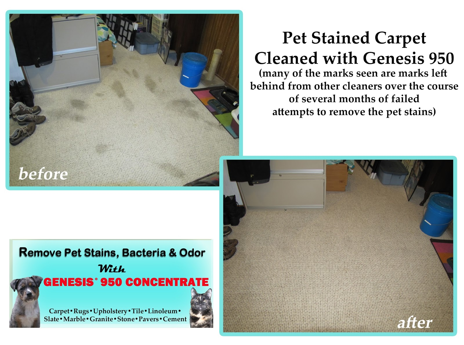 best carpet cleaner and stain remover genesis 950 before after pics. Black Bedroom Furniture Sets. Home Design Ideas
