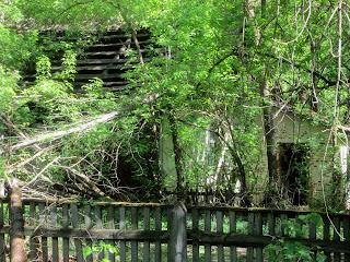 Vegetación y arquitectura en Chernobyl