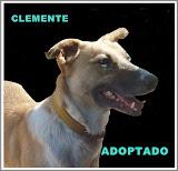 CLEMENTE ADOPTADO!!!