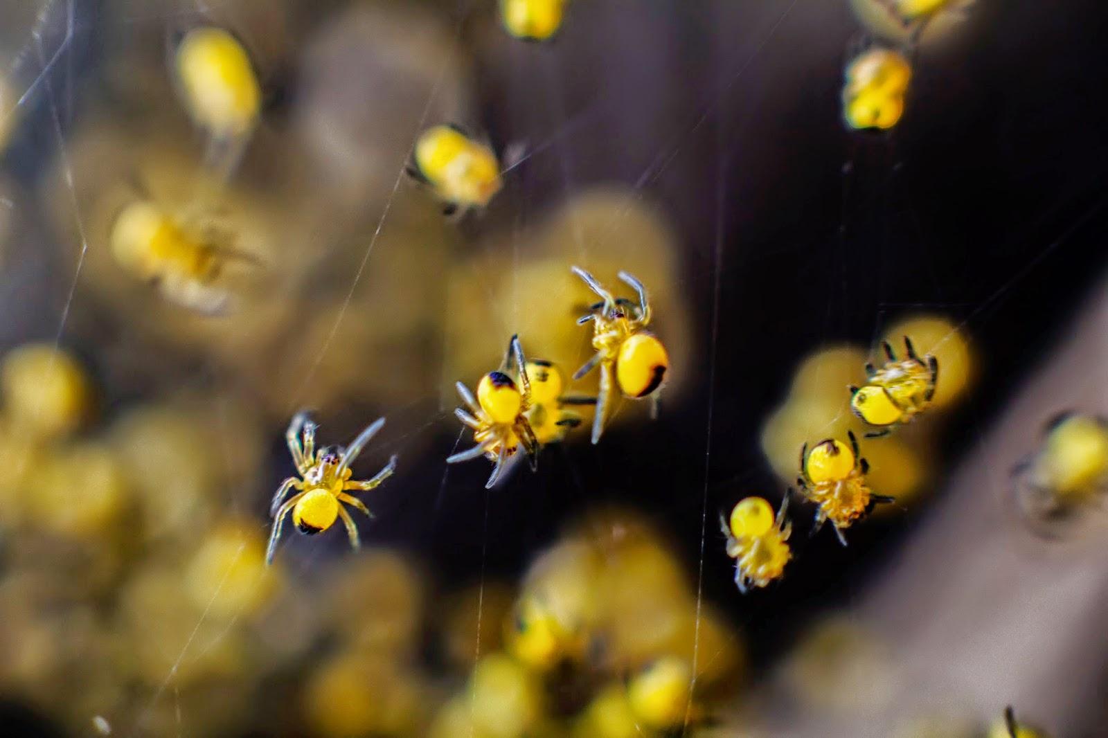 Fotografía macro de un nido de arañas en detalle