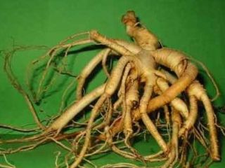 Ginseng asiatico