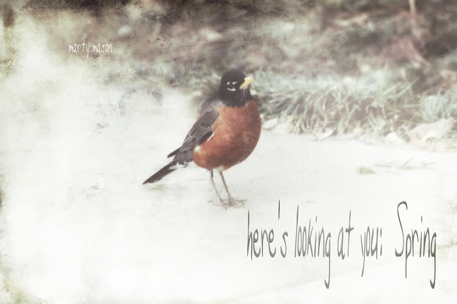 Robin:  A Bird