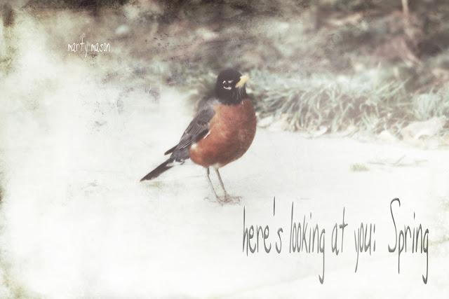 Robin:  A Bird