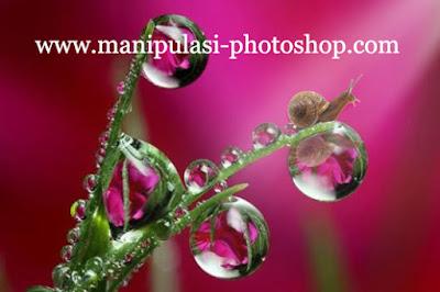 Cara Belajar Edit Foto  Macro Pada Fotografi