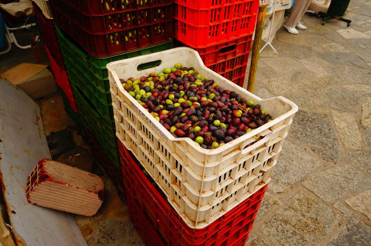 Оливки-и-Маслины