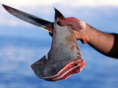 http://1.bp.blogspot.com/-meJE3xyHXAc/TZStmZOtMFI/AAAAAAAAAw0/oOru7V38ACo/s400/shark_finning_save_sharks.jpg