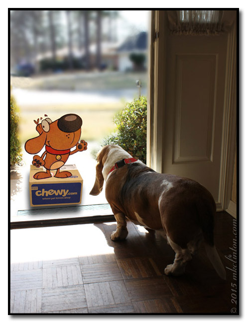 Animated Chewy mascot at the door with Basset Hound