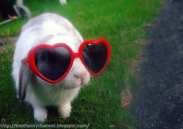 Funny bunny with sunglasses