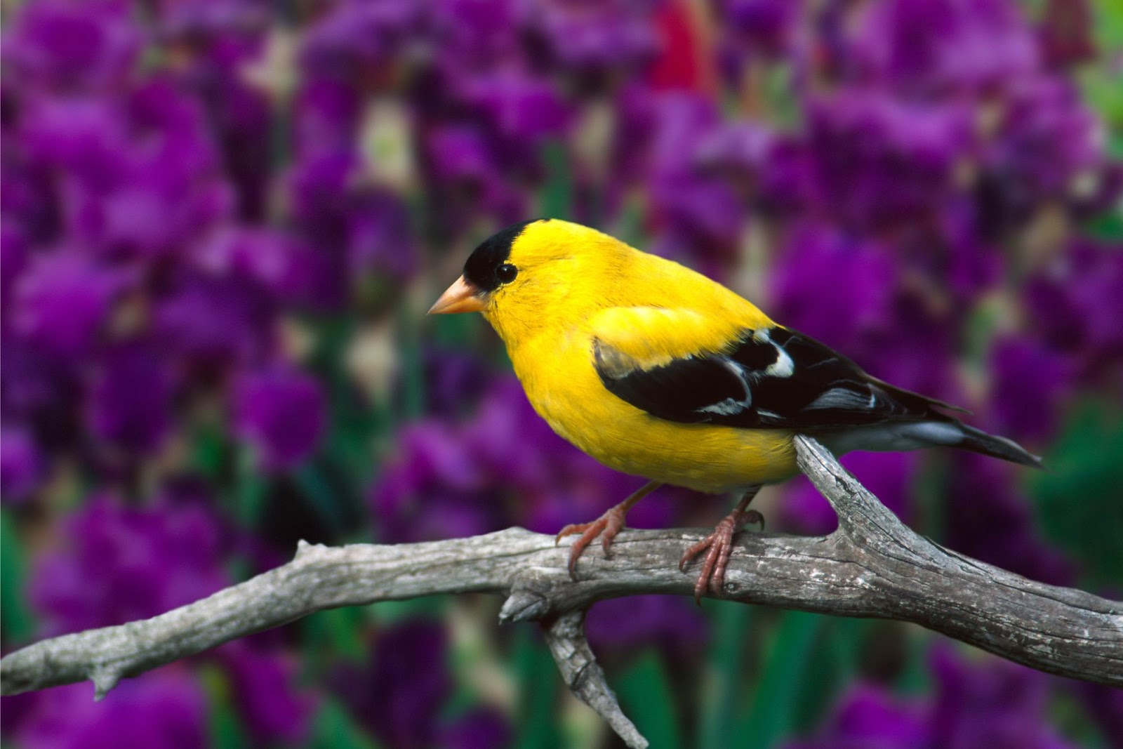 Beautiful Birds HD Wallpaper