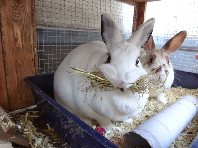 pet Rabbits in Berlin Germany
