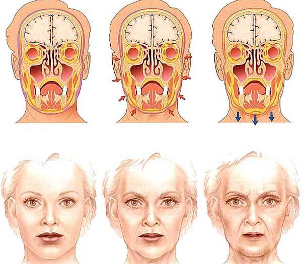 Como envejece el rostro