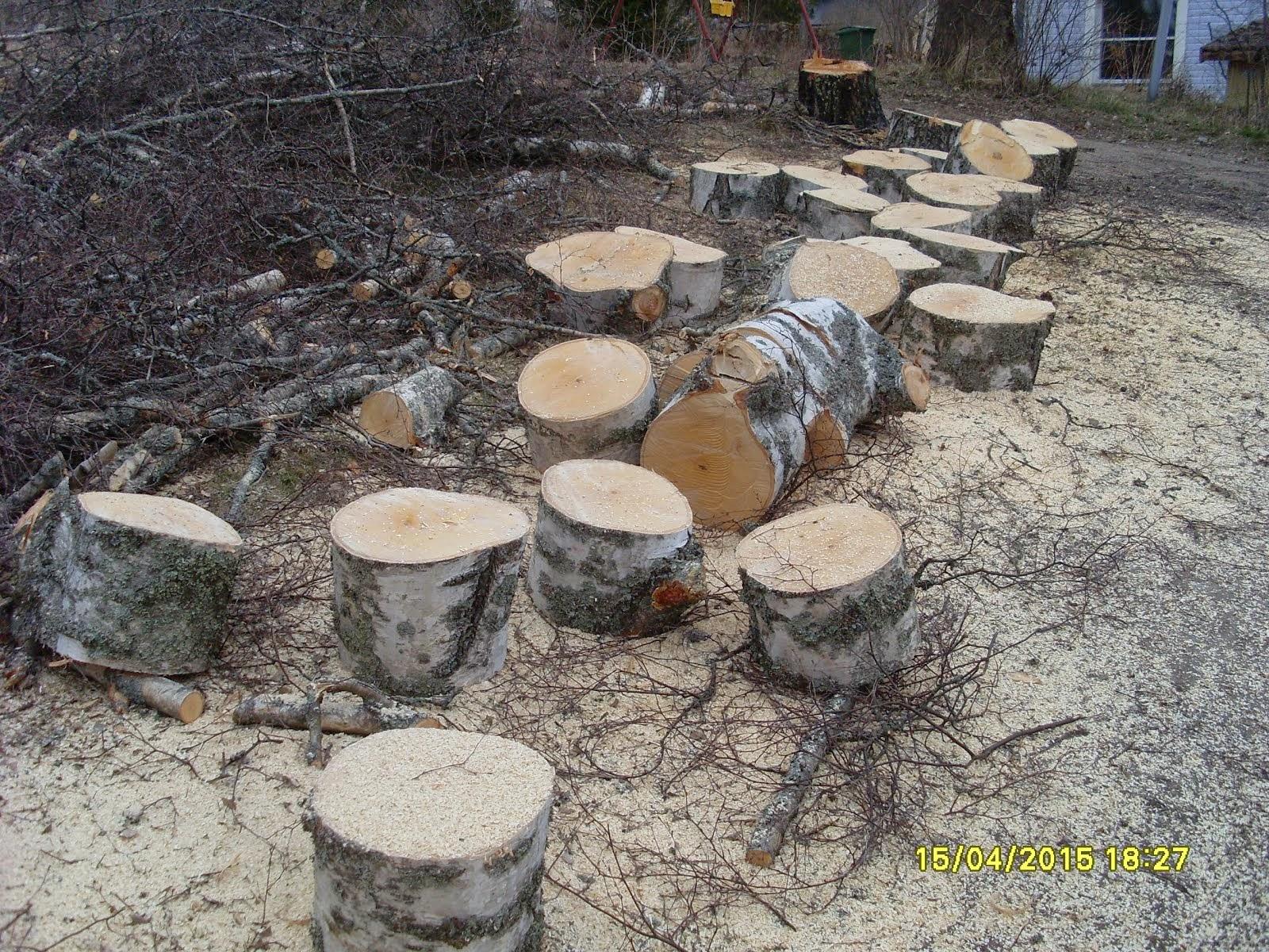 Isotkin pihapuut kumoon ja paloiksi joko stalpen kaadonsuuntaajan tai yhteistyökumppanien kanssa