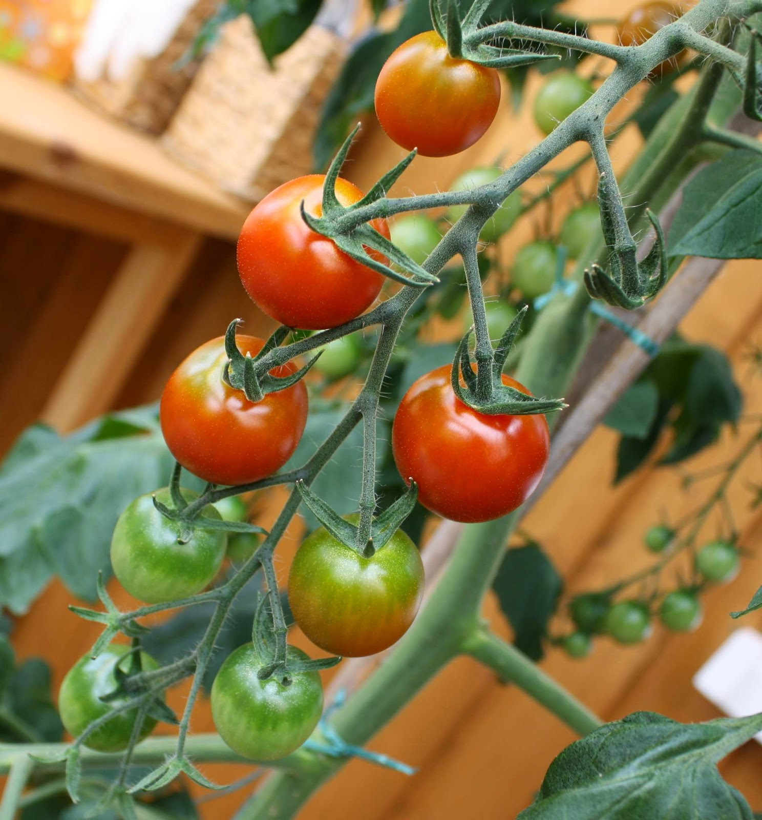 steffi s stempelkeller leckere tomaten. Black Bedroom Furniture Sets. Home Design Ideas