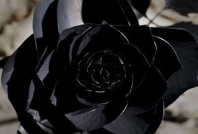 Black Rose Pictures