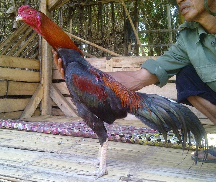 Image Result For Pulsa Murah Di Karangtengah