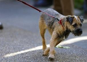 Kéo bạn theo hướng khác. Giúp chó của bạn biết đi bình tĩnh bên cạnh bạn. Đừng bao giờ để cho chúng kéo. Giữ dây xích ngắn nhưng lỏng. Dừng lại bất cứ khi nào bạn cảm thấy nó đi hướng khác. Chúng sẽ dừng lại để xem tại sao bạn không di chuyển. Khi chúng quay lại, thưởng cho chúng và tiếp tục bước đi. Sau một vài ngày, chó của bạn sẽ học được chủ của mình đâu.