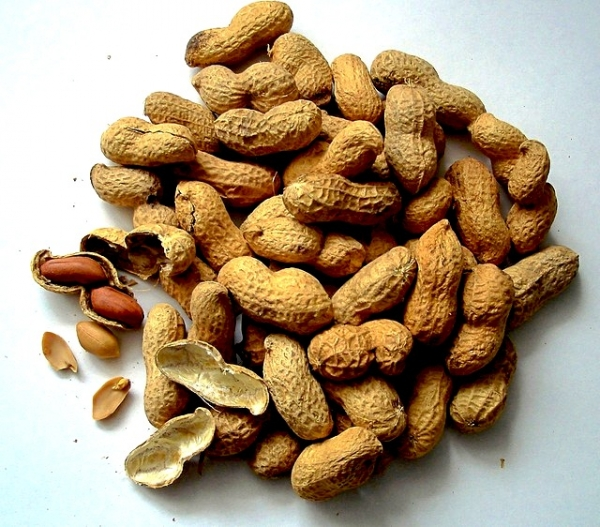 Nuts May Prevent Cancer, Study