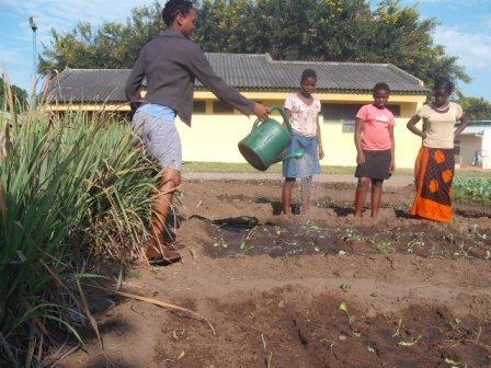 Moçambique: Crianças faltam às aulas em Nhangau para afugentarem macacos das hortas