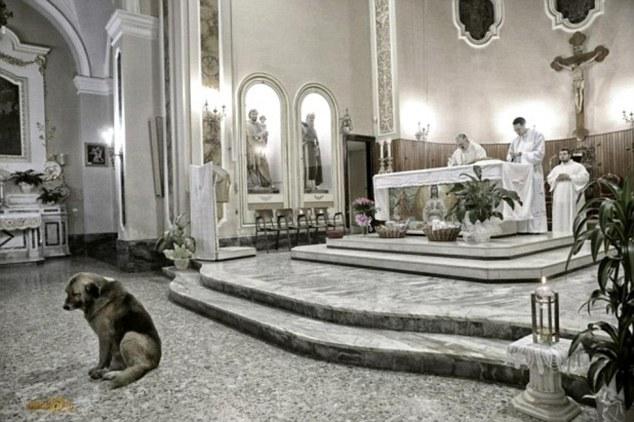 Mundo Loco Mundo: Perro asiste a la iglesia donde se celebró el funeral de  su dueña