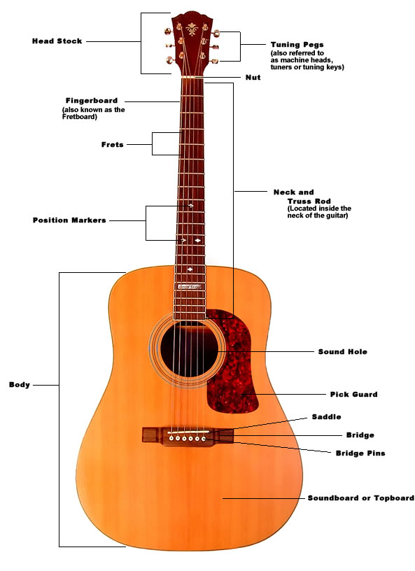 Guitar Corners The Anatomy Of The Acoustic Guitar