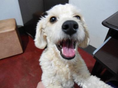 foto da minha cachorrinha Princesa com carinha feliz